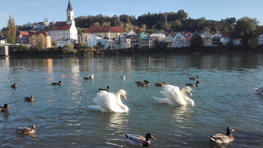Passau Krimi